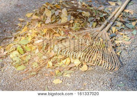 Wooded Fan Rake On Heap Leaves In Autumn Season