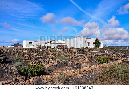 Vineyards In La Geria Lanzarote