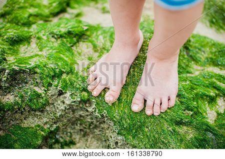 Children's Feet On The Seaweed