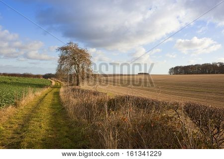 Agricultural Land With Footpath