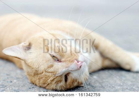 Cat Eye Stray On Ground