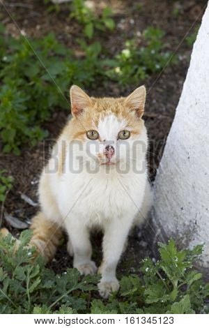 Domestic Cat Sitting On The Ground, Looking At Camera