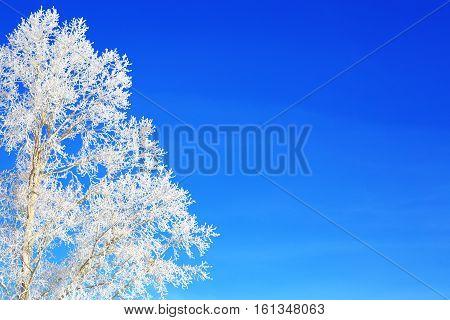 Winter Trees On Blue Sky