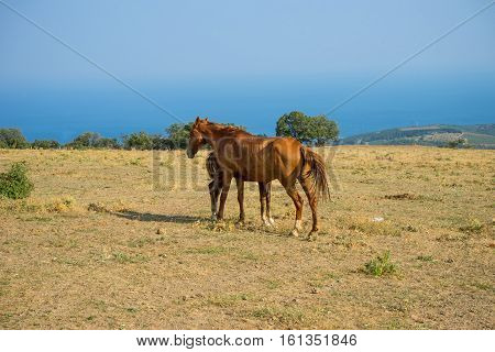 Mare with foal on a mountain pasture