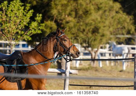 Close up image of a horse running / playing / standing in a traing pen at a horse farm