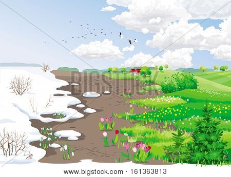Spring rural landscape with melting snow snowdrops tulips and grass.