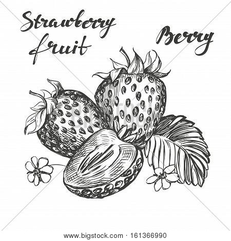 Strawberry set hand drawn vector illustration realistic sketch