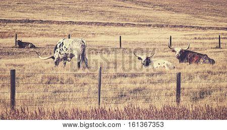 Old Film Retro Stylized Texas Longhorns.