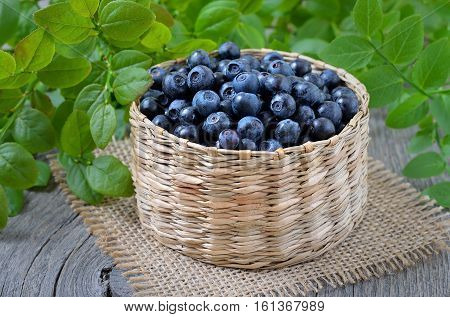 Fresh bilberry in a wicker basket close up
