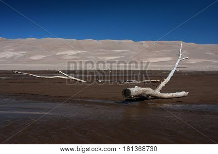 The stark and lonely landscapes of the Great Sand Dunes National park including old branches and logs stranded in the shallow flowing waters of the Medano Creek during Spring.