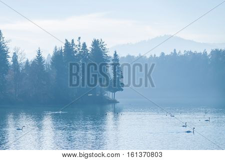 beautiful calm blue winter foggy lake with swans