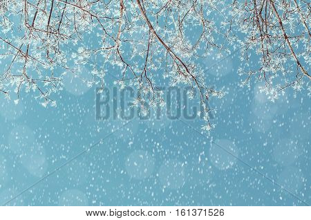 Winter landscape - snowy branches of the winter tree on the background of the sunny winter sky under winter snowfall. Winter nature background in cold tones with free space for text