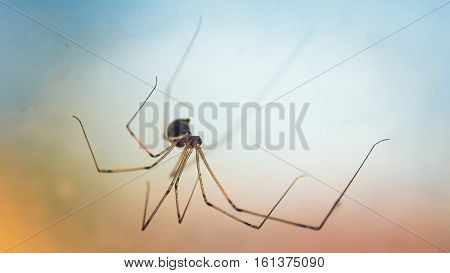 Spider stalking its prey on his spider's web.