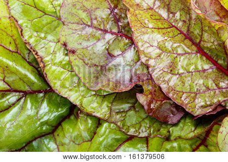 Red chard leaves. Green food background. Top view