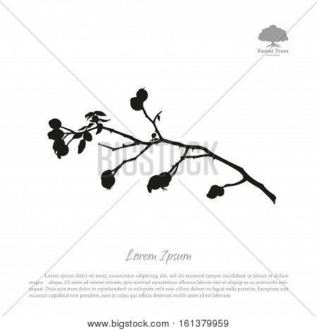 Black silhouette of briar branches on a white background. Brier bush with berries. Vector illustration