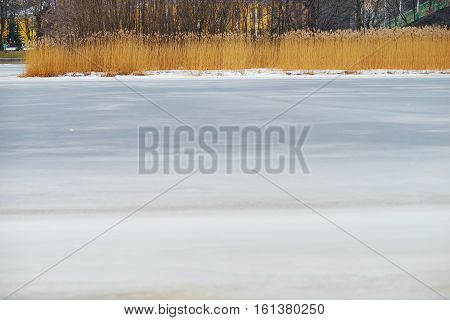 Natural winter background. An icy white expanse of the frozen river with a dry cane on the island against the backdrop of urban landscapes.