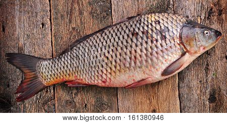 Fresh raw wild carp with lemon, sea salt and pepper on old wooden background.