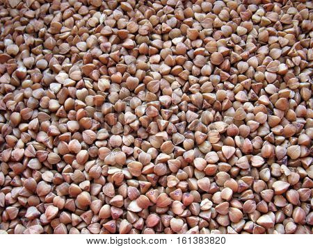Buckwheat groats. Buckwheat grain. Buckwheat background. Dry buckwheat.