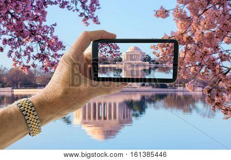 Tourist taking photo on smartphone of cherry blossoms around Jefferson Memorial in Washington DC