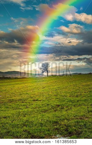 Rainbow in the sky pointing a lonely tree after the storm is gone... Maybe the treasure is hidden there...