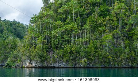 One of many Rocks overgrown with Palmtrees in Hidden Bay on Gam Island near Kabui Bay and Passage. West Papuan, Raja Ampat, Indonesia