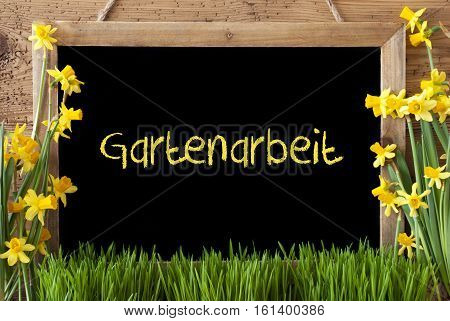 Blackboard With German Text Gartenarbeit Means Gardening. Spring Flowers Nacissus Or Daffodil With Grass. Rustic Aged Wooden Background.