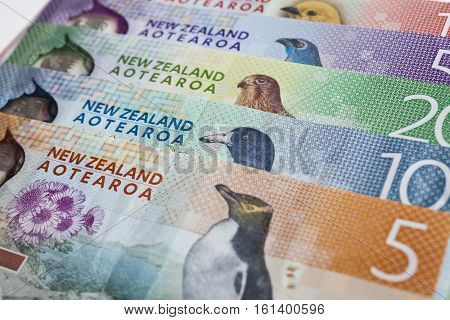 Pile of New Zealand currency laying flat on table