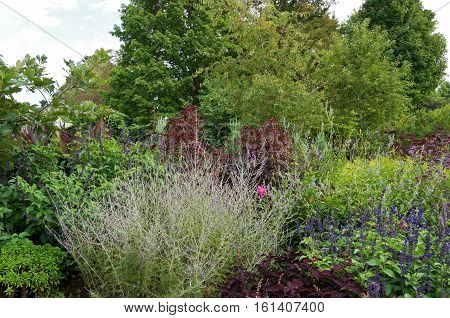 garden of ornamental shrubs and flowering plants bordered by woodlands