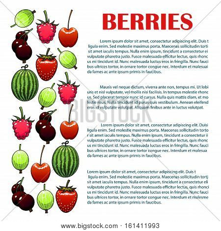 Berries infographic. Isolated vector berry icons of watermelon, cherry, strawberry, raspberry, black currant, gooseberry. Copy space placard, leaflet template for farm and garden fresh berry information