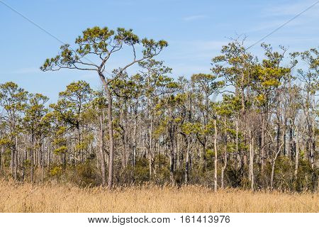 Mackay Island National Wildlife Refuge located on Knotts Island in North Carolina with the brown grass of the winter season.