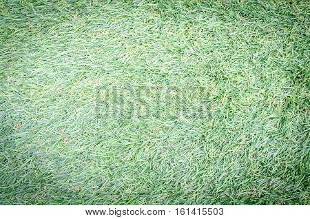 Artificial turf view from above texture and background