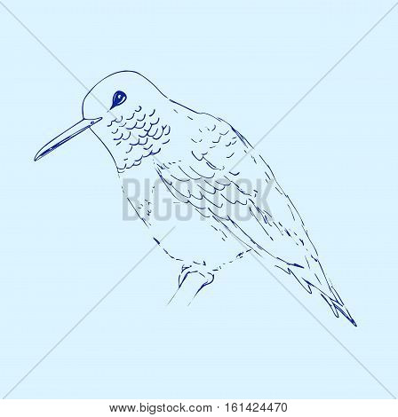 Hummingbird isolated on light blue background. Bird sketch. Vector drawing of colibri for greeting cards invitations prints web projects. Hand drawn illustration.