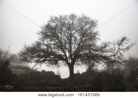 Maple tree in the fog between Torcal De Antequera rock formations Malaga Spain
