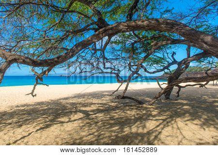 Beautiful beach and tree in Hawaii USA