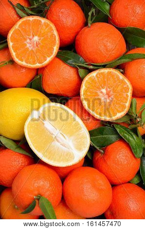 Fresh tangerine clementine and lemons with leaves, top view