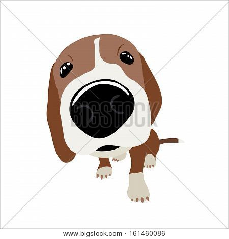 Jack Russell Terrier with a large head and nose. Vector Illustration of a dog.