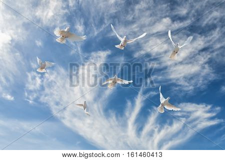 Composition of beautiful white doves in a blue sky. The concept of freedom faith