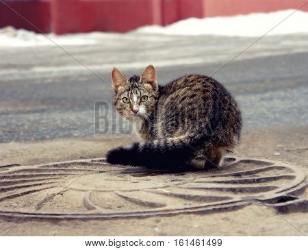 Lonely homeless cat sitting on a road in the city