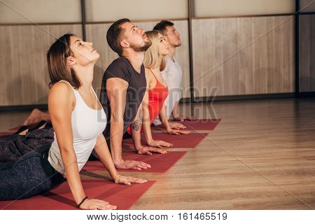 Fitness group doing cobra pose in row at the yoga class, four young people doing yoga exercises
