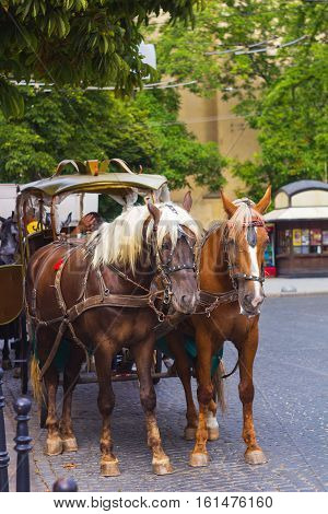 Pair of horses harnessed to carriage standing in city street