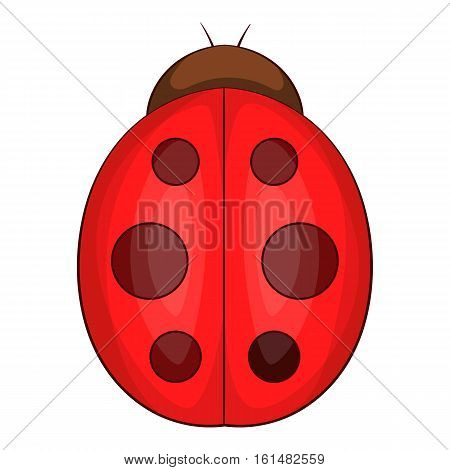 Ladybug icon. Cartoon illustration of ladybug vector icon for web design
