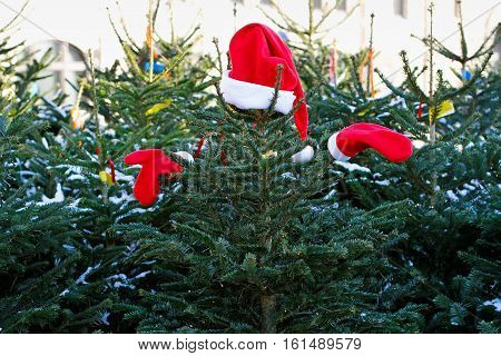 Christmas tree in Santa Claus suit on the Christmas tree market