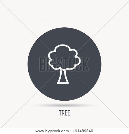 Tree icon. Forest wood sign. Nature environment symbol. Round web button with flat icon. Vector