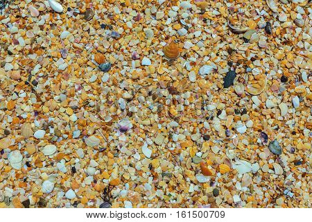 Shell beaches on the Black Sea coast. Opuksky Reserve is located on the southern coast of Kerch Peninsula.