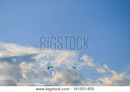 Blue sky with white clouds compatible with the bird has flown.