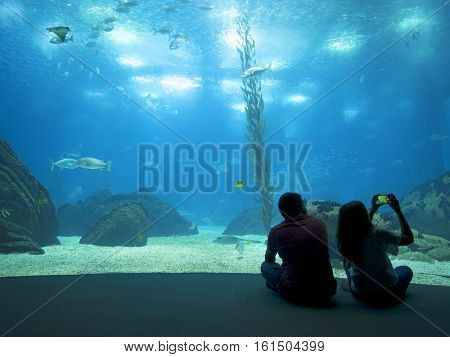 LISBON, PORTUGAL - November 12 2016: Interior view of the Lisbon Oceanario, Portugal, Europe