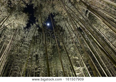 Forest of tall bamboo at night with moonlight peering through a hole in the canopy