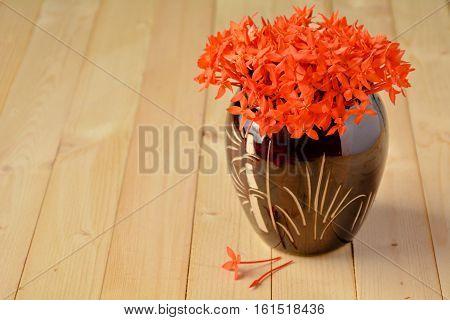 The Ix-ora in flowerpot and Ix-ora drop out of flowerpot.