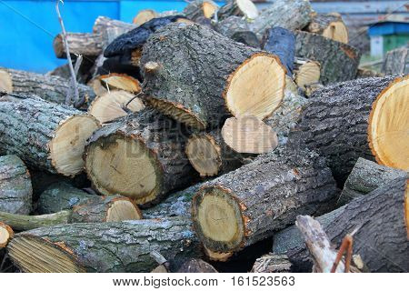 Heap of the wood in the yard