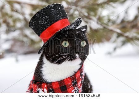 Tuxedo cat wearing a plaid scarf and top hat in the snow